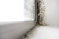 Mold In The Corner Of The Window. Royalty Free Stock Image - 81306776