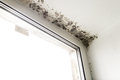 Mold In The Corner Of The Window. Royalty Free Stock Image - 81306786