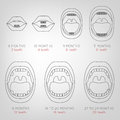 Baby First Teeth Chart Royalty Free Stock Image - 81323766