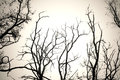 Tree Branches No Leaves Black And White. Dry Dead Trees Isolate White Background. Stock Image - 81329601