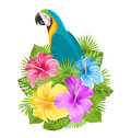 Parrot Ara, Colorful Hibiscus Flowers Blossom And Tropical Leaves Royalty Free Stock Photo - 81357065