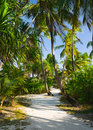 Pathway In Tropical Jungle Royalty Free Stock Photos - 8142748