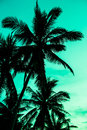 Vintage Toned Picture Of Palm Silhouette Under Sky Royalty Free Stock Photo - 81400755
