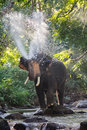 Elephants Spraying Water Royalty Free Stock Images - 81405829