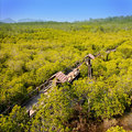 Mangrove Forest Royalty Free Stock Photos - 8151778