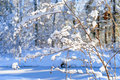 Snowy Frozen Plants, Winter Forest Background Royalty Free Stock Photos - 81535888