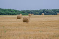 Wheat Harvest Royalty Free Stock Photography - 81630847