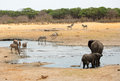 Elephants Around A Waterhole With Kudu And Zebra In Hwange National Park Royalty Free Stock Photography - 81663587