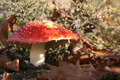 Fly Agaric Stock Photography - 8171232