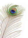 Peacock Feather Royalty Free Stock Image - 8176886
