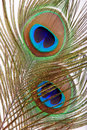 Peacock Feather Eye Stock Photography - 8176912