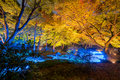 Autumn Illumination Stock Photos - 81711583