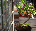 Cherry Tree From Clay, Handmade Bonsai Stock Photo - 81718430