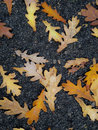 Autumn Leaves Stock Image - 81745831