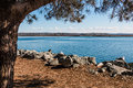 Pine Tree On Mission Bay In San Diego Royalty Free Stock Photos - 81755608