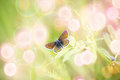 Beautiful Brown Butterfly On Spring Flower Stock Photos - 81767003