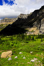 Mountain Goats At Glacier National Park Royalty Free Stock Images - 8180339
