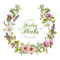 Vector Herbal Wreath Royalty Free Stock Images - 81853379