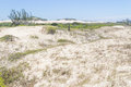 Vegetation Over Dunes  At Itapeva Park In Torres Beach Royalty Free Stock Photo - 81899735