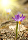 Small Spring Flower Royalty Free Stock Image - 8199816