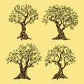 Set Of Greek Olive Oil Trees In Vintage Style Stock Images - 81996104