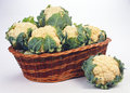 Cabbage Royalty Free Stock Photo - 8209825