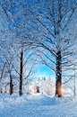 Winter Landscape Night Scene - Deserted Snowy Walkway With Snowfall And Snowy Trees In The Night Royalty Free Stock Image - 82009256
