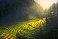 Morning Light From Rice On Terrace At Vietnam Landscape Royalty Free Stock Photo - 82222965