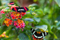 Butterflies Royalty Free Stock Images - 82248129