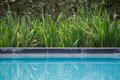 Pool Side Plants View At Luxury Hotel With Nice Green Plants Alongside The Shallow Blue Water. Pool Side Reflections Of The Greene Royalty Free Stock Photos - 82271718