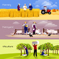 Vineyard Farmyard Crop Harvesting Flat Banners Royalty Free Stock Photography - 82284077