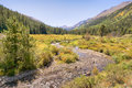 Autumn Colors, Pine Valley, Collegiate Peaks Wilderness, Pike An Stock Photo - 82284710