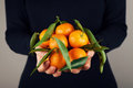Woman Holding In Hands Tangerines Or Mandarins With Green Leaves. Stock Photography - 82392972