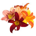 Composition From Lilies Royalty Free Stock Photography - 8243277