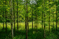 Saplings In Sunny Summer Morning Royalty Free Stock Photography - 82523987