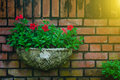 Outdoor Flower Pot Hanging In Small Garden And  During Summer Stock Photography - 82534272