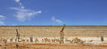 Panorama Of A Busy Waterhole In Etosha National Park Stock Images - 82601334