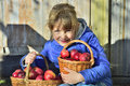 Child Picking Apples On A Farm In Autumn. Little Girl Playing In Apple Tree Orchard. Kids Pick Fruit In A Basket. Outdoor Fun For Stock Image - 82612401