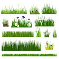 Grass Vector Illustration. Royalty Free Stock Photography - 82666737