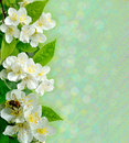 Jasmine Flowers With Bee Royalty Free Stock Images - 82672809
