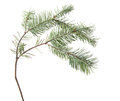 Pine Twig, Needles Isolated On White. Royalty Free Stock Photography - 82679707