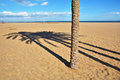Lights And Shadows On The Beach Royalty Free Stock Image - 82782666
