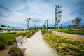 Walkway And Grasses At First Ward Park, In Uptown Charlotte, Nor Stock Image - 82822701