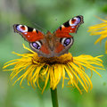 Butterfly With Opened Wings Over Flower. Macro Closeup With Red Royalty Free Stock Photos - 82884538