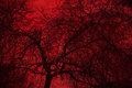 Art Photo Mystical Tree On A Red Background. Double Exposure Stock Photos - 82917043