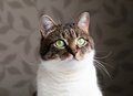 Beautiful Portrait Of A Tabby Cat Dreaming Near The Window. Funny Colored Cat With Striped Head And White Body Royalty Free Stock Photography - 82919997