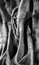 Gnarled Tree Close Up  Royalty Free Stock Photos - 82949388