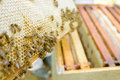 Closeup Bees On Honey Comb Royalty Free Stock Images - 82962239