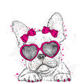 Cute Puppy With Glasses Heart. Valentine`s Day. Stock Image - 82985311