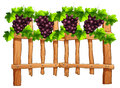 Fence Design With Grapes Stock Photography - 82990642